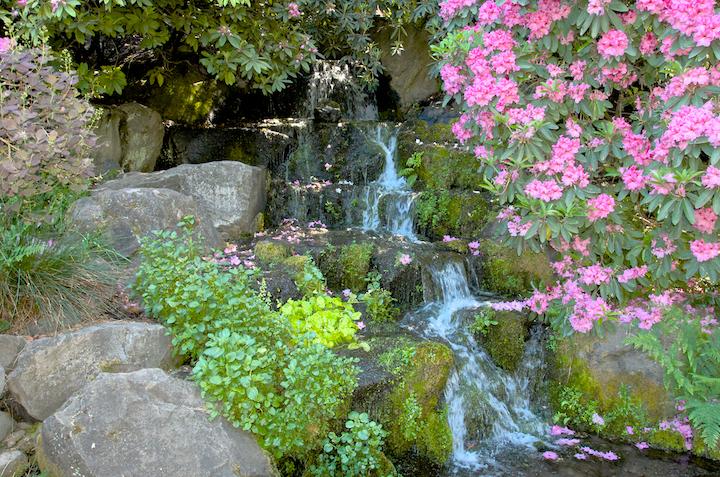 Crystal springs rhododendron garden rhododendron garden 13 may 7 33 for Crystal springs rhododendron garden